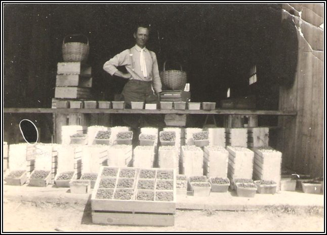 Mr. Frank W. Wry, farm manager for W.B. Fawcett with berries for sale (1923)