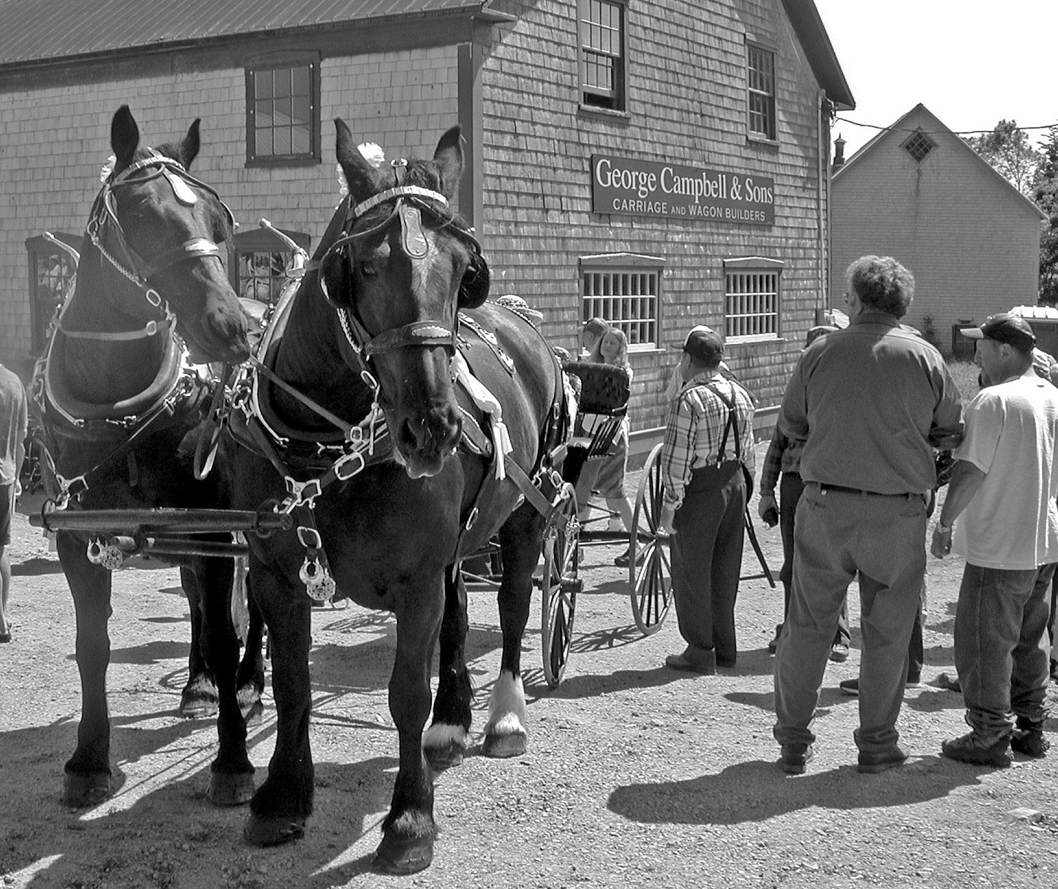 Horses and carriage at opening of Carriage Factory Museum